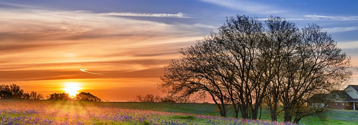 Sunset over an open field with flowers